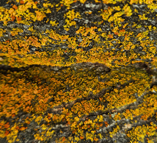 Abundance Botany Change Geometry Growing Growth Lichen Lichen On A Tree Orange Outdoors Traveling Wyoming Yellow