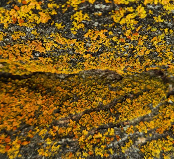 Abundance Botany Change Geometry Growing Growth Lichen Lichen On A Tree Orange Outdoors Traveling Wyoming Yellow