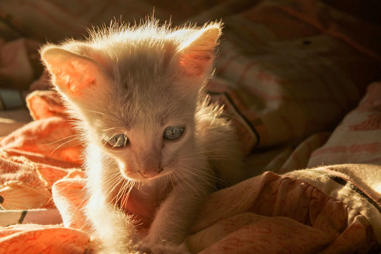 Close-up of kitten relaxing on bed at home