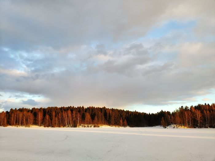 No Filter Beauty In Nature Tree Snow Cold Temperature Winter Mountain Pine Tree Forest Sky Landscape Cloud - Sky