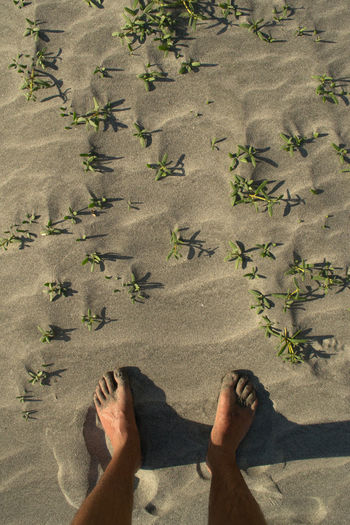 Barefoot Beach Close-up Colombia Colombia ♥  Day Directly Above EyeEm Best Shots EyeEm Best Shots - Nature EyeEm Nature Lover High Angle View Human Body Part Human Foot Lifestyles Low Section Nature One Person Outdoors People Real People Sand Santa Marta, Colombia Standing Sunlight