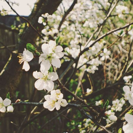 Nature White Color Tree Growth Flower Blossom Close-up Springtime Beauty In Nature Twig Outdoors Fragility No People Branch Freshness Flower Head Day Spring Is Coming  Inbloom Beautiful View Macro EyeEmNewHere