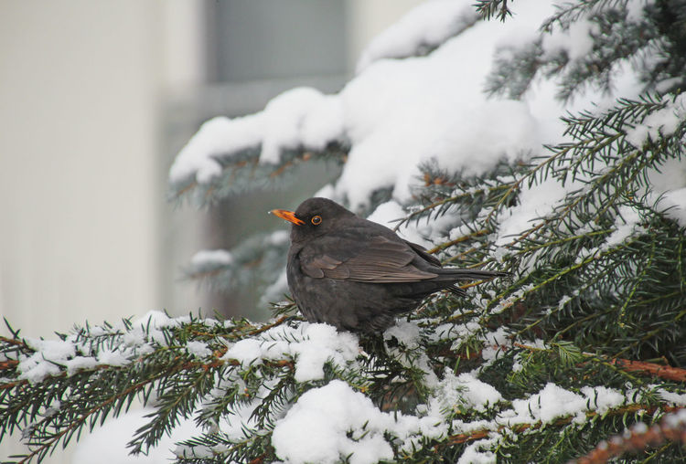 Close-Up Of Bird Perching On Twig During Winter