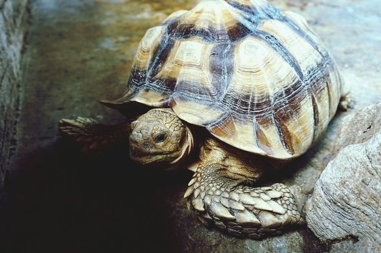 Turtle Petting Zoo Old Random Thoughts I walk slowly but I never walk backward.