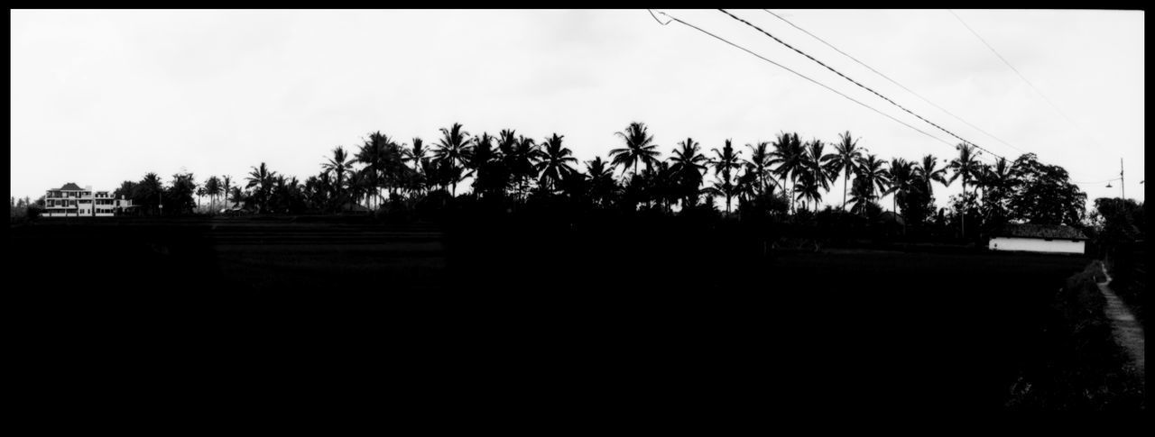 Silhouette of Rice 35 Mm ASIA Analogue Photography Bali Balinese Hinduism Faith INDONESIA Palmenwald Palms Rice Rural Shrine Silhouette Tranquility Travel Black And White Island Nature No People Outdoors Panoramic Photography Plant Rice Fields  Sea Wege