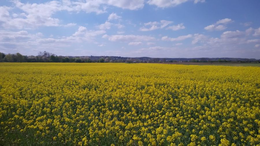 Idyllic Shot Of Oilseed Rape Field Against Sky