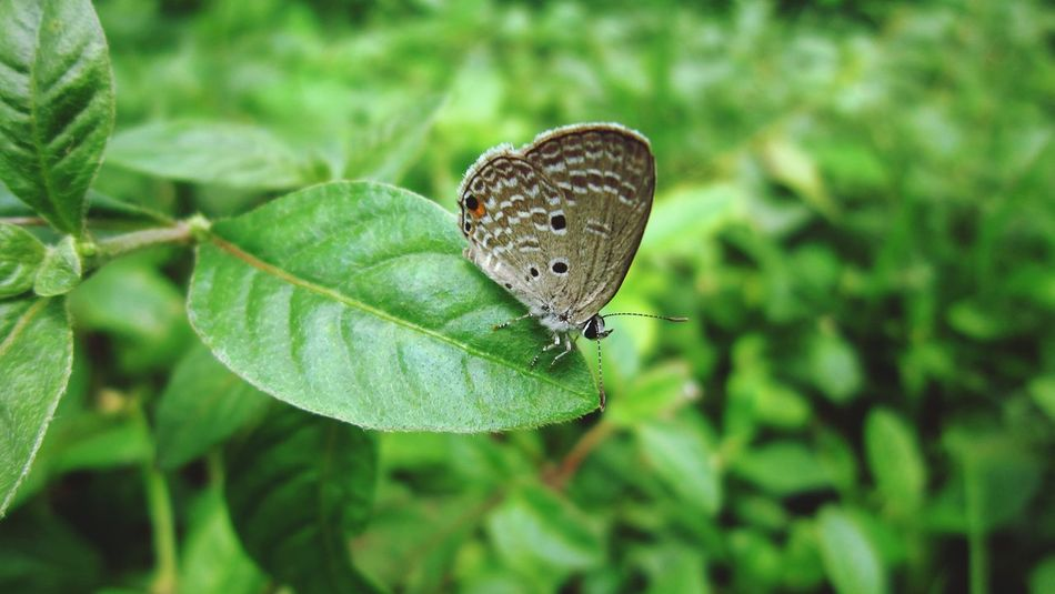 Enjoying Life Hello World Nature_collection Butterfly ❤