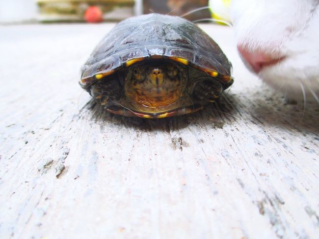 Cat Tortoise Animal_collection Wild EyeEm Animal Lover Knowing