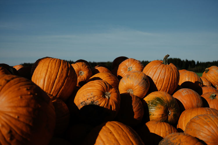 Close-up of pumpkins on field against sky