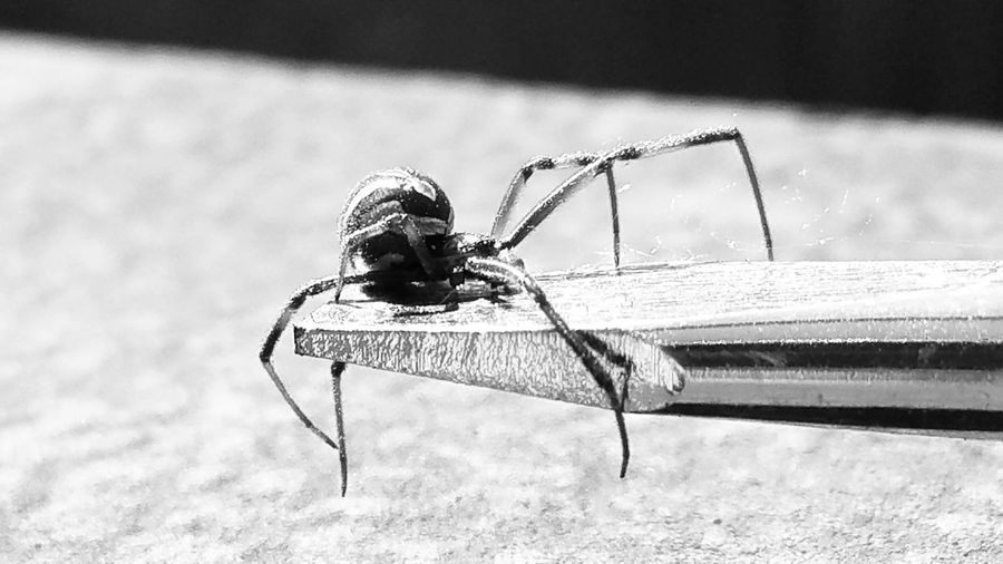 😂🏃............😱🕸 Spider Black Widow Deadly Bite Bnw Bnw_captures Bnw Photography Bnw_collection Flat Head Screwdriver EyeEm EyeEm Best Shots EyeEm Best Shots - Black + White Exceptional Photographs Water Day No People Outdoors