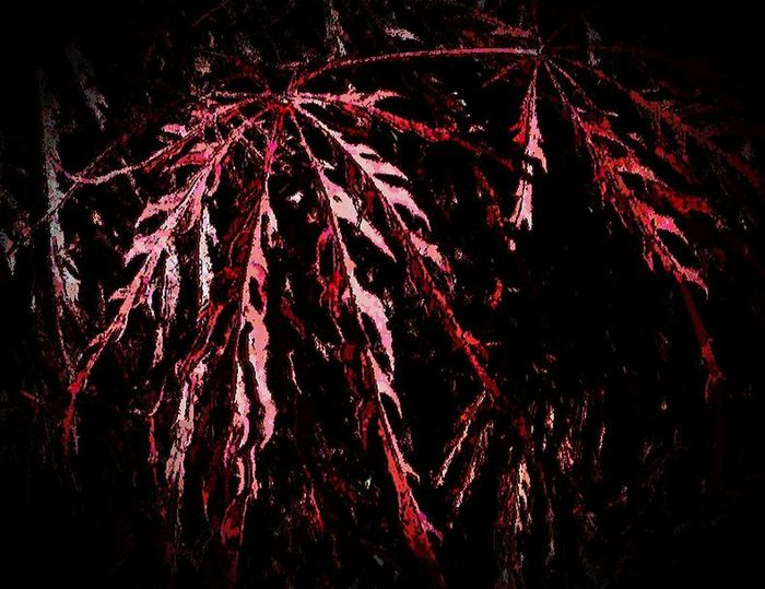 Branches Cell Phone Manipulation Cell Phone Photography Close-up Garden Center Leaves Manipulated No People Outdoors Plant Red