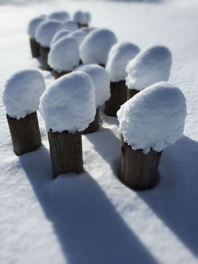 Snow ❄ Königsfeld Magic Mushrooms Schneepilze Winter Wonderland