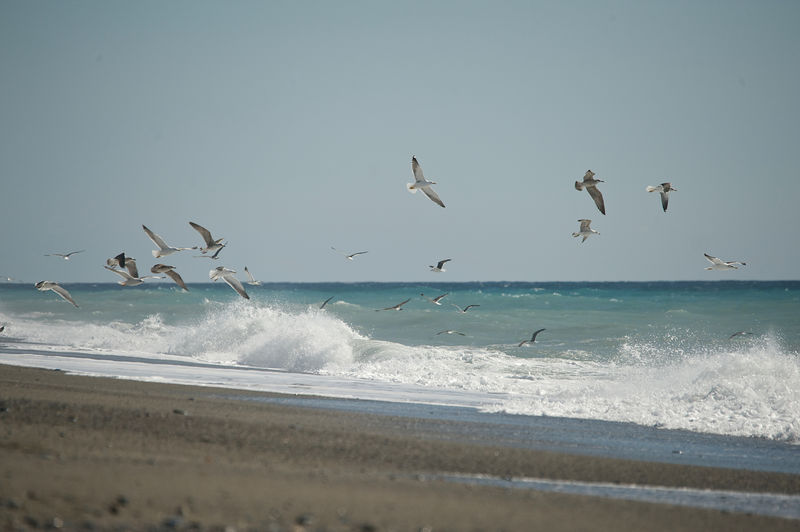it's time to fly away Animal Wildlife Animals In The Wild Beach Beauty In Nature Beauty In Nature Bird Flying Horizon Over Water Nature No people Outdoor Outdoors Salobreña Sea Sea Landscape Seagulls Tranquillity Water Wave Freedom Summertime Travel Pictures EyeEmNewHere Art Is Everywhere