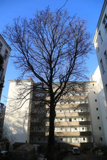 Architecture Bare Tree Building Exterior Built Structure City Day Low Angle View No People Outdoors Sky Surronded Tree