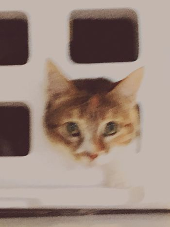 Jailbreak Chats Cat