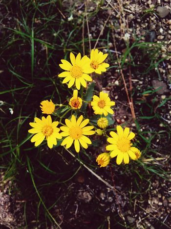 """little """"flower"""" thy summer's play Petal Yellow Flower Springtime Blooming Growth Close-up Color Of Season"""
