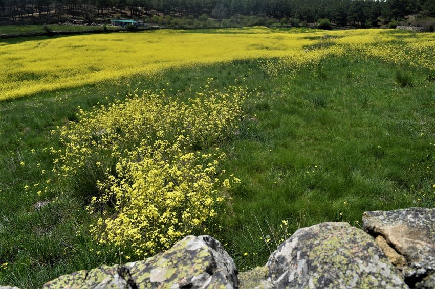 Beauty In Nature Day Flower Flowering Plant Grass Green Color Land Landscape Outdoors Tranquil Scene Tranquility Yellow