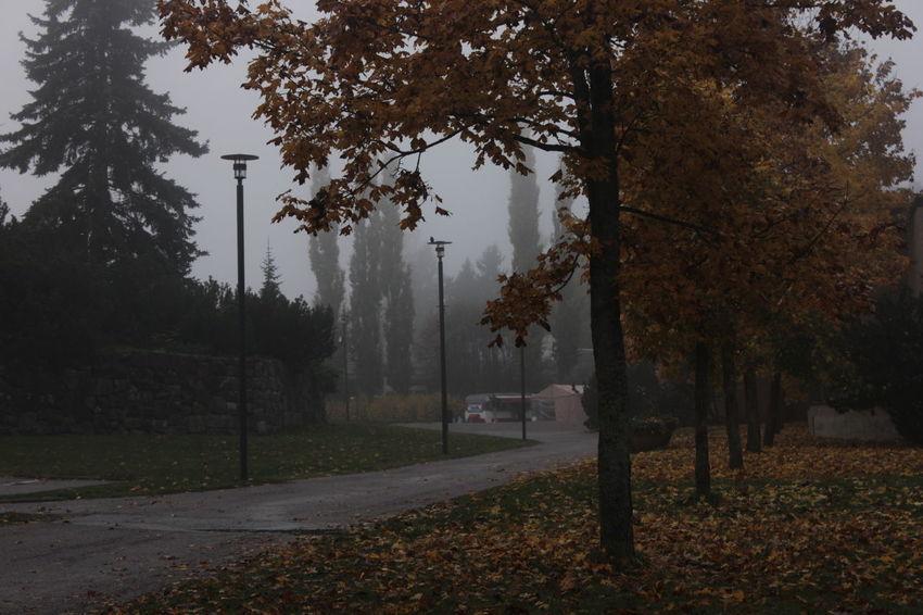 Misty autumn days. Autumn Fall Foggy Mist Misty No People Town Tree