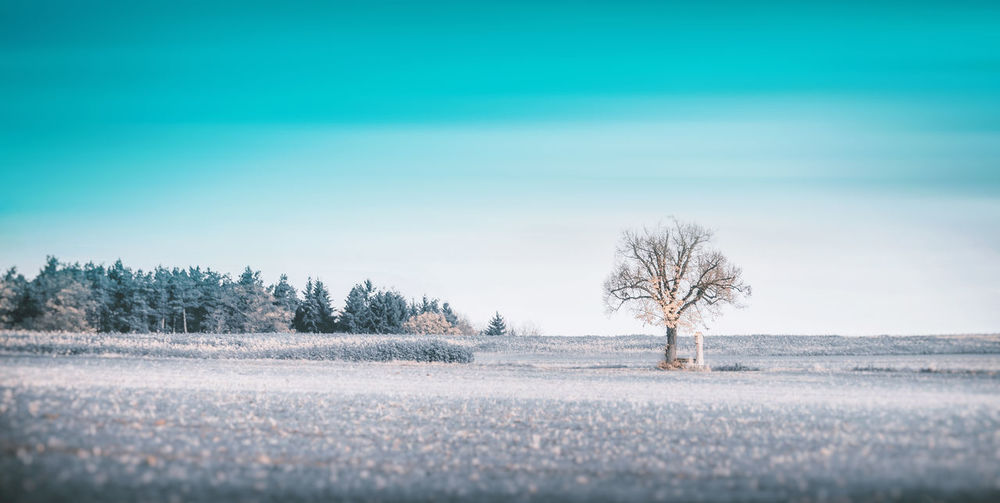 Diversity in landscape Diversity Landscape Panorama Nature Outdoors Day No People Tree Sky Plant Scenics - Nature Land Beauty In Nature Cold Temperature Tranquility Snow Environment Tranquil Scene Clear Sky Field Bare Tree Non-urban Scene Winter Isolated Arid Climate