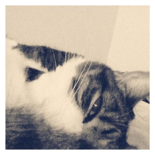 Dozeoff First Eyeem Photo Sunday Morning What I Value Catlovers Cats Of EyeEm Animals IPhoneography