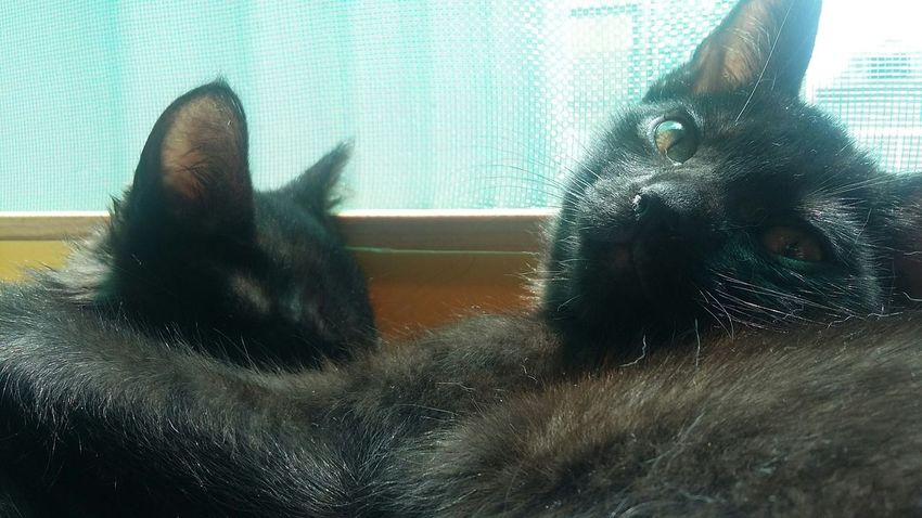 Blackcatlove Sunny Taking Photos Cat Cute No Filter Brothers Green Eyes Pets BLackCat