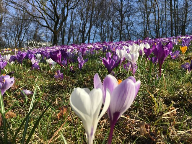 Flower Nature Spring Beauty In Nature Plant Flower Head Crocus