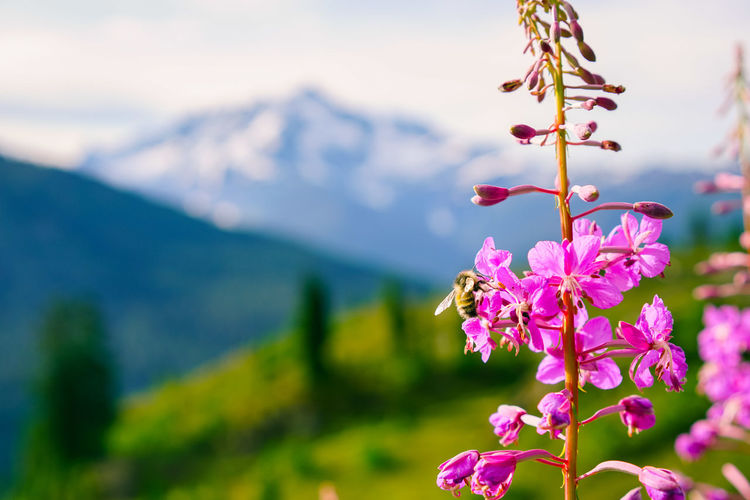 Beauty In Nature Blooming Close-up Day Flower Flower Head Focus On Foreground Fragility Freshness Growth Mountain Nature No People Outdoors Pink Color Plant Tree