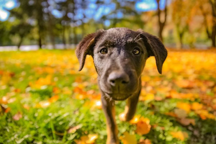 Curiosity Doglover Dogs Of EyeEm Bosnia And Herzegovina Beauty In Nature Canon Canonphotography EyeEm Selects One Animal Dog Canine Domestic Animal Themes Pets Domestic Animals Animal Portrait Focus On Foreground Looking At Camera Nature