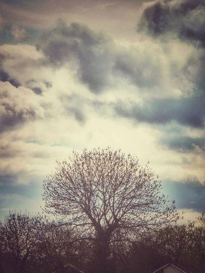 Retro tree.