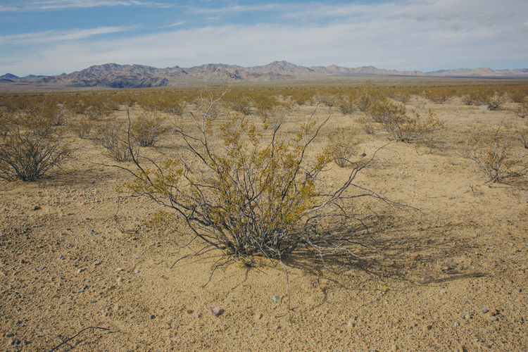 Arid Climate Beauty In Nature Day Landscape Nature No People Outdoors Scenics Sky Tranquil Scene Tranquility