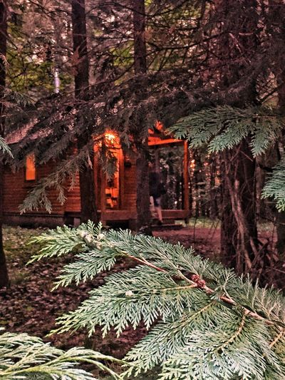 Nature Beauty In Nature Forest Tree House♥ Nature Beauty In Nature Aggostyán