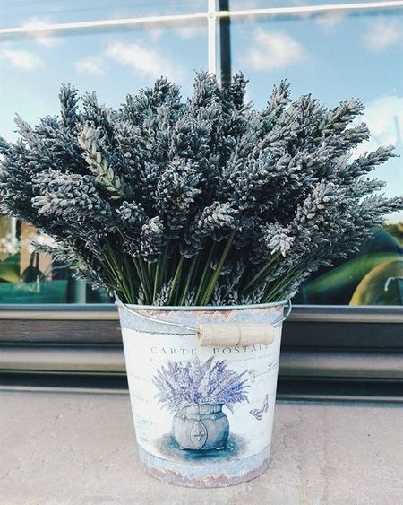 Lavender Flower Instaflower Purple Window Beautiful Flowerpot Photo Photooftheday Insta Instalike Instagood Instadaily Instamood InstaVsco Photography Phone Huawei P8 P8lite VSCO Vscocam Vscogood Vscophile Vscoczenature vscocze vscoczech