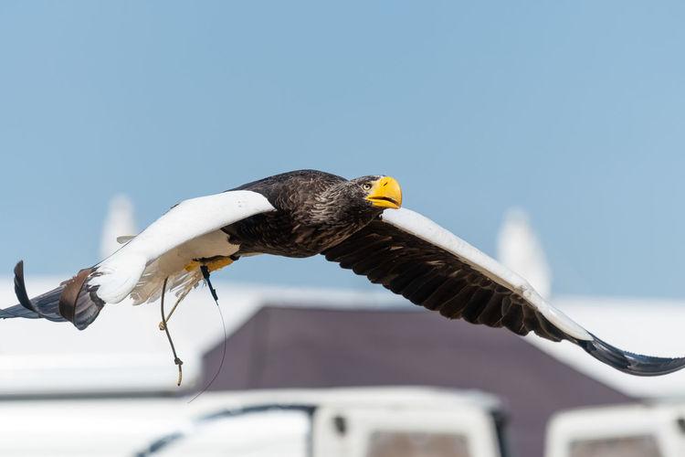 Bird flying against clear sky