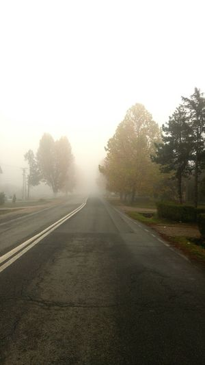 Fog Weather Road The Way Forward Outdoors No People Sky Day Winter Tree Tree City Beauty In Nature Green Color Tree Area Nature