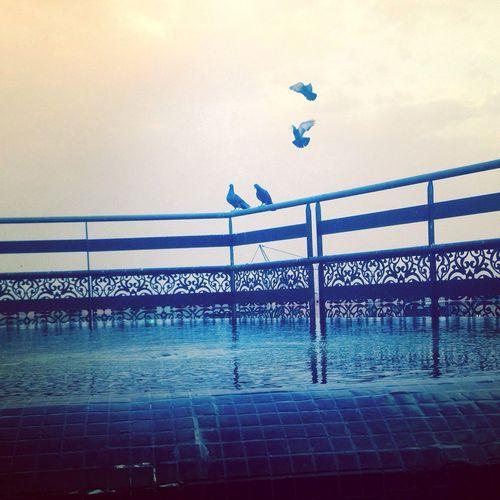 Rooftop Birds Marrakesh