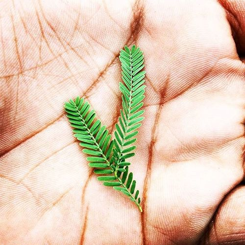 Hand in hand with a leaf. Leaf Hand Palmistry Innovative Instaedit Nsit Junoon Junoonnsit Nature Green Photooftheday Indiagram DelhiGram PhonePhotography Indiapictures Shutterbug