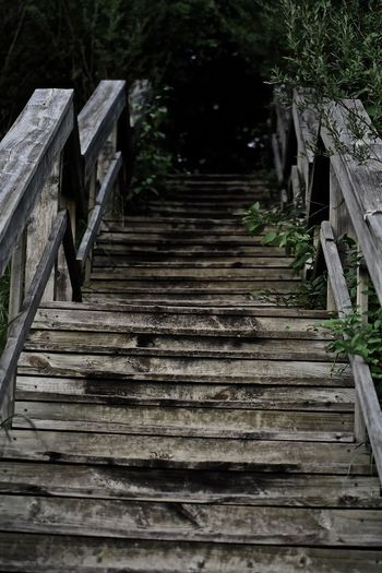 Low angle view of wooden staircase in forest