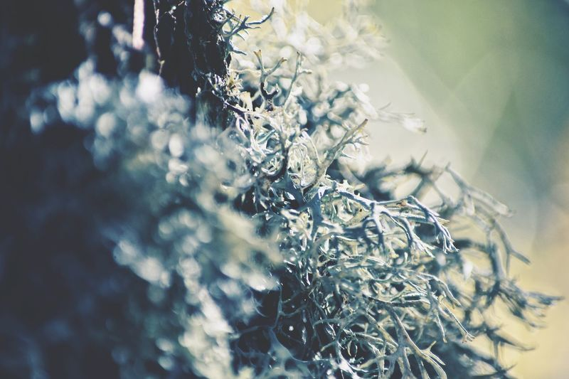 Lichen Winter Is Coming Nature Day No People Close-up Outdoors Beauty In Nature Growth Plant Tree Fragility EyeEm Best Shots EyeEm Selects Selective Focus Let's Do It Chic! The Week On EyeEm Respect For The Good Taste EyeEmNewHere Exceptional Photographs