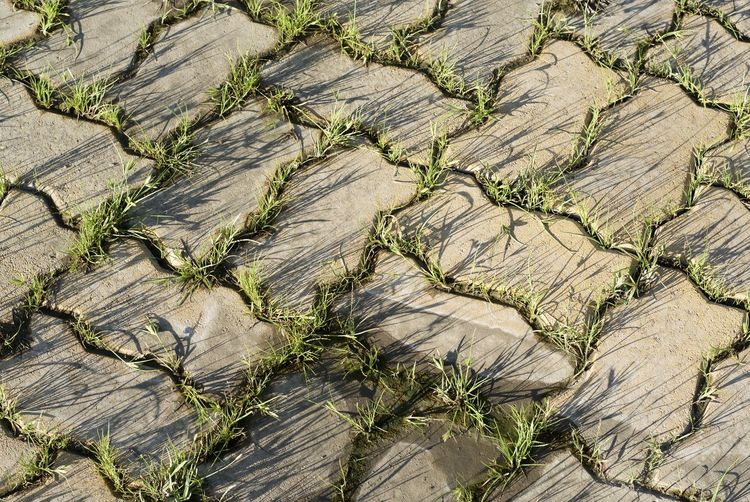 Grass growing amidst cobblestone footpath