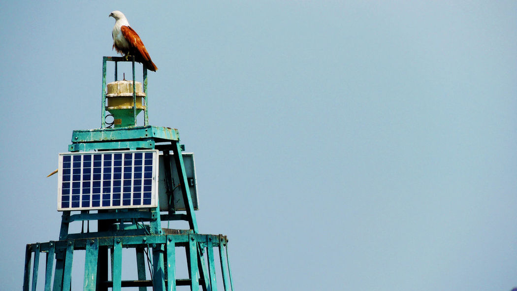 Animal Themes Animal Wildlife Animals In The Wild Beautiful Nature Beauty In Nature Bird Bluesky Clear Sky Day Eagle King Of Sky Nature One Animal Outdoors Perching Resting Sea Sky