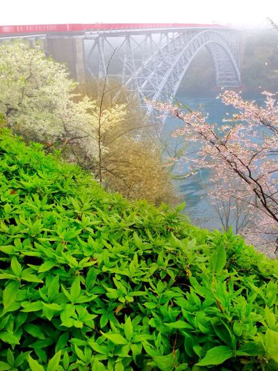 Selective Focusing Beauty In Nature My Point Of View No People Myshoot Myangle My Unique Style Overcast Weather ❤ Foggy Morning Plant Growth Nature Green Color Leaf Bridge - Man Made Structure Day No People Outdoors Beauty In Nature Architecture Close-up Saikai City Japan Japan Photography