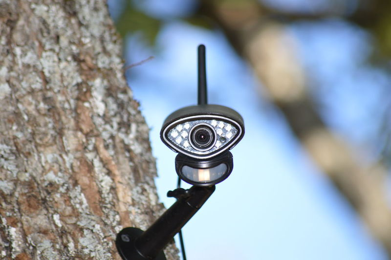 Low angle view of electric lamp on tree