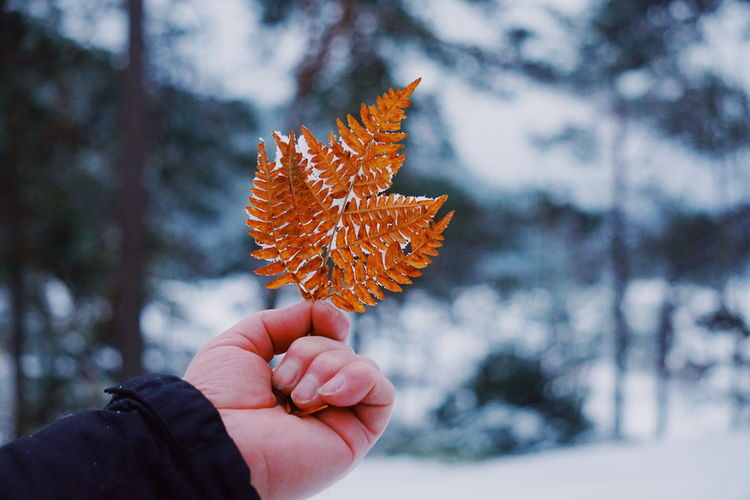 a hand holding a Frozen fern leaf Fern Frozen Leaf Frozen Nature Hand Unrecognizable Person Winter Cold Frost Human Hand Human Body Part Autumn Holding Nature Winter One Person Focus On Foreground Outdoors Leaf Close-up Tree Change Beauty In Nature Cold Temperature Shades Of Winter