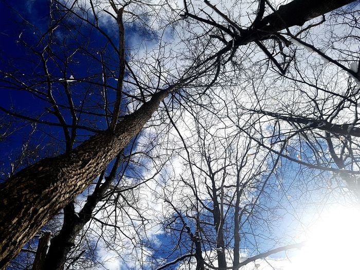 Tree Branch Bare Tree Backgrounds Sky Close-up