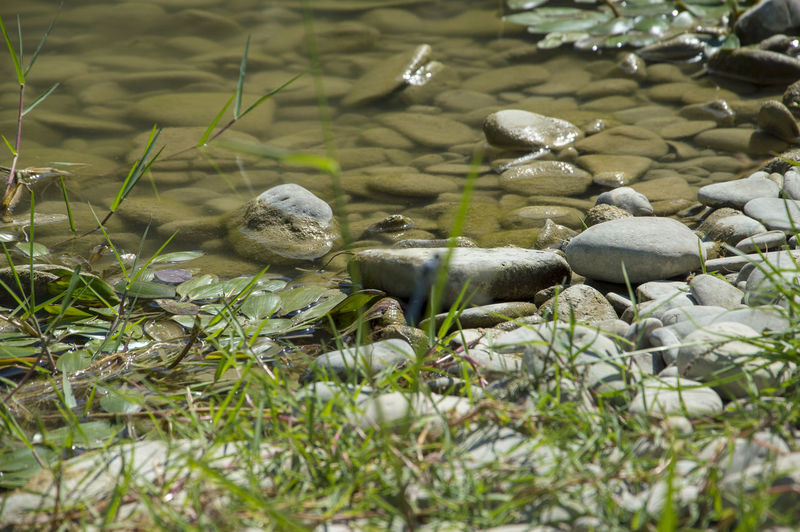 Small stones river close up during a sunny day No People Nature Animal Wildlife Plant Selective Focus Animals In The Wild Animal Day Animal Themes Vertebrate Land Water Group Of Animals Bird Beauty In Nature Lake Green Color Growth Outdoors Pebble