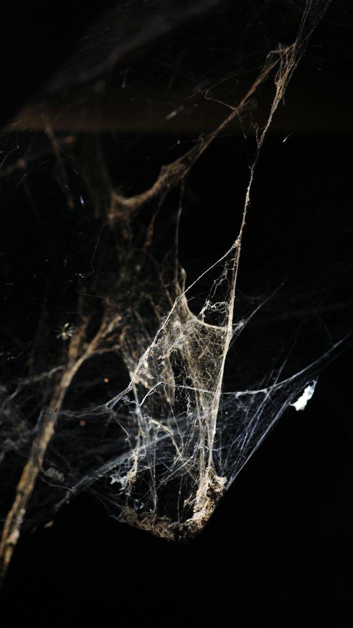 Close-Up Of Spider Web At Night