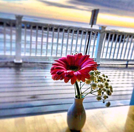 Nantasket Beach Resort; Hull, Massachusetts (Southshore Boston) Travel Flower Selective Focus Single Flower Springtime Tranquility Breakfast Breakfastwithaview Paidtotravel Ocean OceanviewOceanfront Close-up Oceanaddict