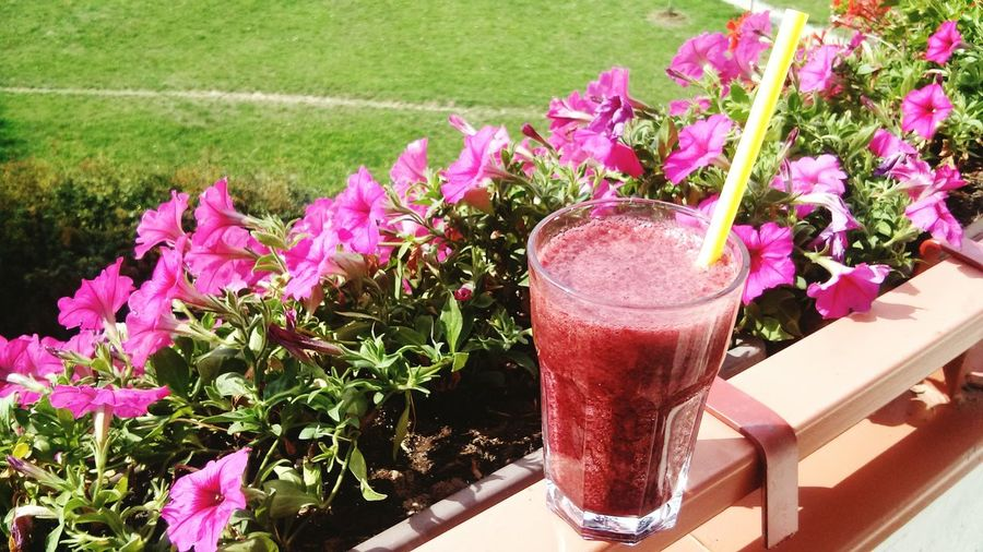 One more summer please😢🌻 Sunbathing Smoothies!♥ Vegan Flowers,Plants & Garden Fresh Food Summer Balcony Enjoying Nature Naturelovers Picnic