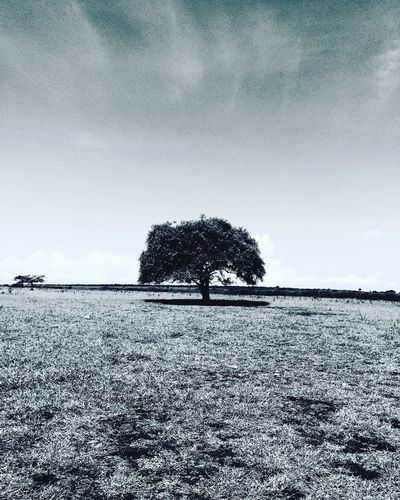 Lonerism Tree Tranquil Scene Landscape Tranquility Mid Distance Scenics Solitude Single Tree Sky Remote Non-urban Scene Nature Field Beauty In Nature Day Outdoors Tourism Distant No People Countryside Iphone5s