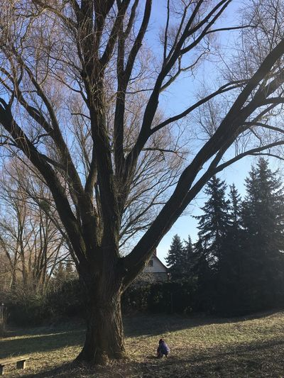 Playing in the cold sun Tree Bare Tree Real People Outdoors Branch Nature Sky Day One Person Beauty In Nature People